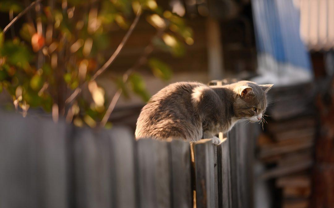 Quelles règles en matière de clôture mitoyenne ?