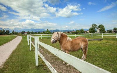 Clôture de terrain agricole : quelle réglementation?